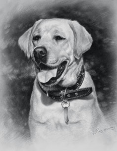 Drawing of dog